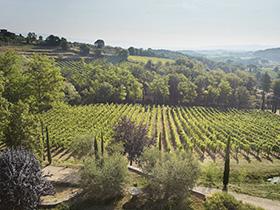 Bertrand-Habsiger-Fattoria-Di-Caspri-Toscane-Italie-52025-Montevarchi