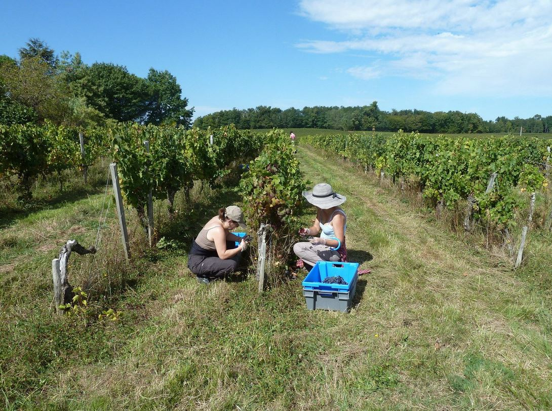 Valerie-Godelu-2015--Vin-de-France--Bordeaux-33710-Tauriac